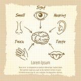 Human sense organs synopsis vintage poster. Design. Vector illustration vector illustration