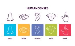 Human Senses Informative Poster with Body Parts. Human senses info poster with body parts. Nose and smell, eye and vision, ear and hearing, tongue and taste Stock Photos