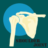 Human shoulder joint Stock Images