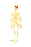 Human skelet toy. Isolated on the white background royalty free stock photo