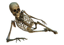 Human Skeleton. 3D digital render of an old human skeleton isolated on white background Stock Photo