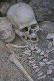 Human skeleton from an archaeological excavation Stock Image