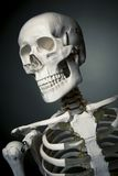 Human skeleton body on a grey background Royalty Free Stock Photos