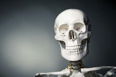 Human skeleton body on a grey background Royalty Free Stock Photography