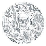 Human skeleton, bones, joints medical poster or label design. Vector sketch illustration. Natural orthopedics treatment stock illustration