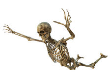 Human Skeleton. 3D digital render of an old flying human skeleton isolated on white background Royalty Free Stock Photo