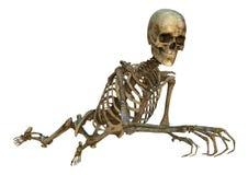 Human Skeleton. 3D digital render of an old flying human skeleton isolated on white background Stock Images