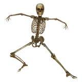 Human Skeleton Stock Photo