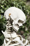 Human skeleton. Detail of a human skull, anatomy Stock Photo