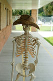 Human skeleton with hat Royalty Free Stock Images