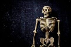 Human Skeleton. Isolated on black background. Skeletons pose stock image