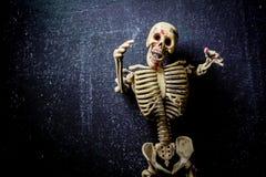 Human Skeleton royalty free stock photos