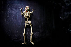 Human Skeleton Stock Photos