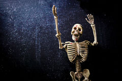Human Skeleton. Isolated on black background. Skeletons pose royalty free stock images