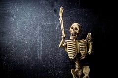 Human Skeleton stock image