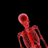 Human skeleton Royalty Free Stock Photography
