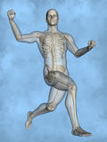 Human skeleton M-SK-POSE M4ay-24-tr50-2, 3D Model. Human Poses, Human Skeleton, Blue Background Stock Photography