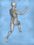 Human skeleton M-SK-POSE M4ay-24-tr50-7, 3D Model. Human Poses, Human Skeleton, Blue Background Royalty Free Stock Photography
