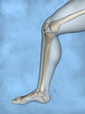 Human skeleton M-SK-POSE M4ay-24-tr50-3, 3D Model. Human Poses, Human Skeleton, Blue Background Royalty Free Stock Images