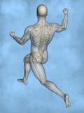 Human skeleton M-SK-POSE M4ay-24-tr50-6, 3D Model. Human Poses, Human Skeleton, Blue Background Stock Photos