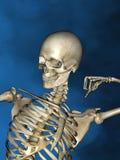 Human skeleton M-SK-POSE Vfm-1-6, 3D Model. Human Poses, Human Skeleton, Blue Background Stock Photography