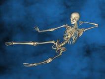 Human skeleton M-SK-POSE Vfm-1-3, 3D Model. Human Poses, Human Skeleton, Blue Background Royalty Free Stock Photo
