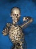 Human skeleton M-SK-POSE Vfm-1-11, 3D Model. Human Poses, Human Skeleton, Blue Background Stock Photos
