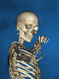 Human skeleton M-SK-POSE Vfm-1-7, 3D Model. Human Poses, Human Skeleton, Blue Background Royalty Free Stock Photo