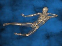 Human skeleton M-SK-POSE Vfm-1-9, 3D Model. Human Poses, Human Skeleton, Blue Background Stock Photos