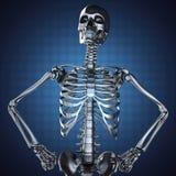 Human skeleton model on blue background Royalty Free Stock Photos