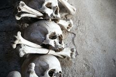 Human skeleton parts lie still and quiet Royalty Free Stock Photo