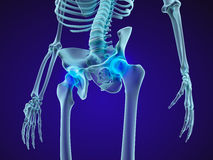 Human skeleton: pelvis and sacrum. Xray view. Stock Photography