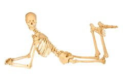 Human Skeleton Posing. Full human skeleton posing isolation on white royalty free stock photo