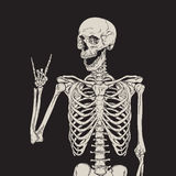 Human skeleton posing isolated over black background vector Stock Photos