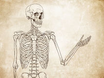 Human skeleton posing over old grunge paper background vector Stock Images
