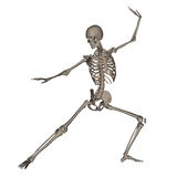 Human skeleton ready to fight - 3D render Royalty Free Stock Photos
