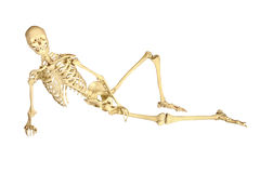 Human skeleton reclining. Full human skeleton reclining, isolation on white background stock image