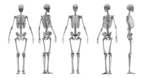 Human skeleton set 3d rendering. vector illustration