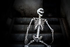 Human skeleton sitting on the stairs and laughing, in scary abandoned building. Stock Image