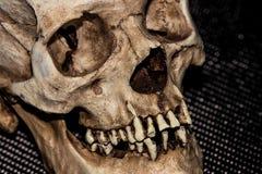 Human skeleton skull head on black. Background royalty free stock photo