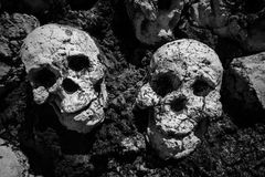 Human skeleton skulls , Black and white. Artificial Human skeleton skulls with Black and white process, Scary and horror concept Royalty Free Stock Images