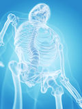 The human skeleton - the thorax Royalty Free Stock Images