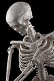 Human skeleton toy. Model human skeleton on a black background stock photos