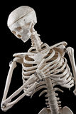 Human skeleton toy. Model human skeleton on a black background royalty free stock image