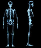 Human skeleton under the x-rays Royalty Free Stock Image