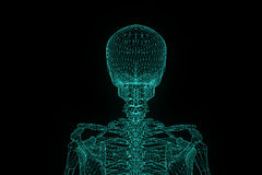 Human Skeleton Wireframe Hologram in Motion. Nice 3D Rendering Royalty Free Stock Photography