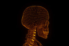 Human Skeleton Wireframe Hologram in Motion. Nice 3D Rendering Stock Image