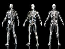Human Skeleton With Transparent Body Isolated In Black Background 3d Render Royalty Free Stock Photography