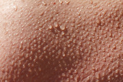 Human skin close up. Structure of caucasian Skin Royalty Free Stock Image