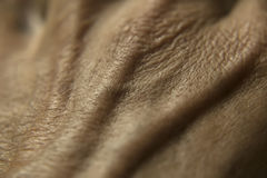 Human skin. Detail of the human hand skin Stock Images